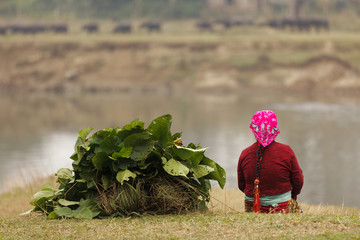 woman farmer sitting, Chitwan, Nepal