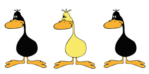 Ducks line up.