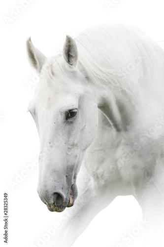 Wall mural white horse