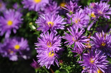 Blumen 201