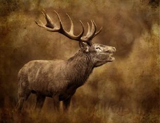 Photo sur Toile Cerf cerf chasse,chasseur,tadition,brame bois cors cervidé mammifèr
