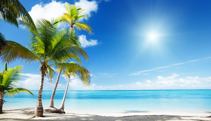 Fotomurales - Caribbean sea and coconut palms