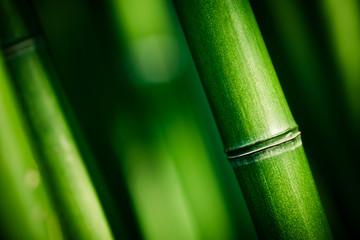 Obraz Bambou zen - fototapety do salonu