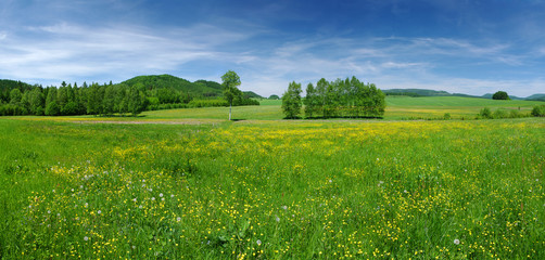 Wall Murals Meadow Fresh flowered meadow