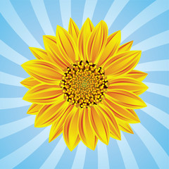 vector sunflower on retro background