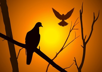Silhouette illustration of birds