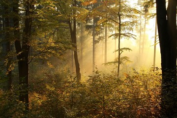 Keuken foto achterwand Bos in mist Picturesque autumnal forest backlit by the rising sun