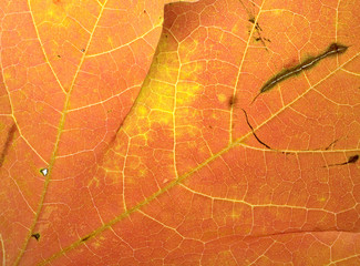 Brightly colored leaf