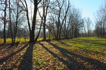 inverno paesaggio 1415