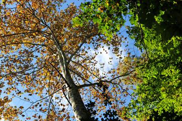 bosco alberi 1447