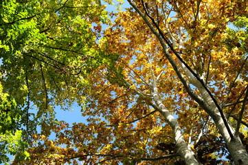 bosco alberi 1448