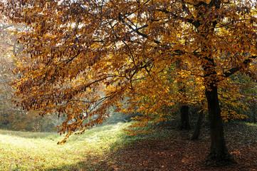 paesaggio alberi 1475