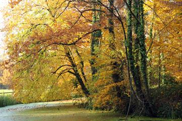 paesaggio alberi 1480