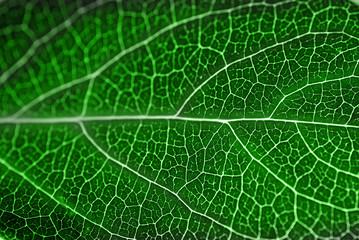 textured green leaf