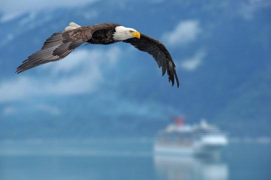 american bald eagle superimposed over alaska inside passage scen