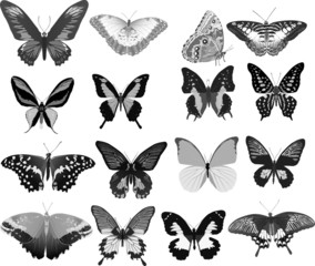 sixteen gray butterflies
