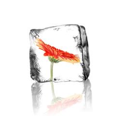 Blume im Eisblock