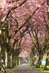 Blossom Avenue, Edinburgh