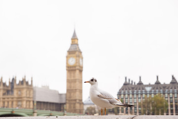 Fototapete - Seagull's perspective view of a Big Ben