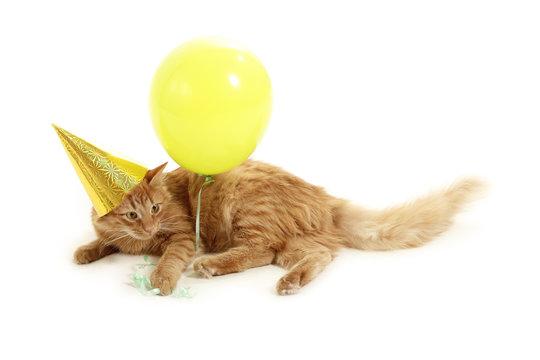 kitten holiday play with cap green balloon