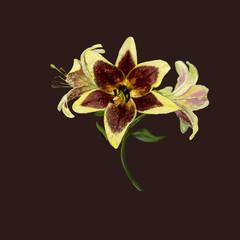 Живописный рисунок цветов лилии на тёмном фоне