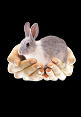 Rabbit in the hand