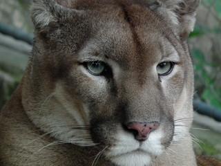 Canvas Prints Puma Puma look