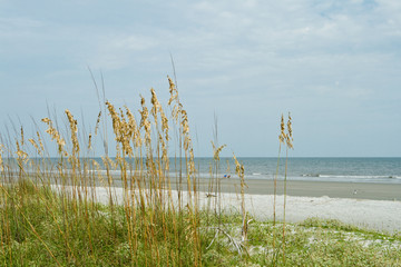 Sea Oat Grass, Sand Dune, Overlooking Ocean, Hilton Head Beach