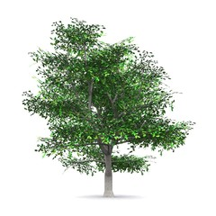 Der Baum - freigestellt 04