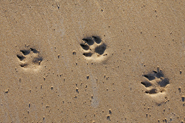 Animal footprints in sand
