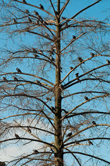 Group of pidgeons perching on a tree without leaves
