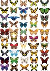 set of buttrflies
