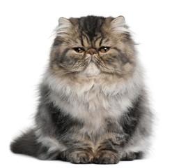 Persian kitten, 4 months old, sitting