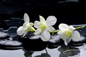 Obraz Beauty row of orchid and stone with reflection - fototapety do salonu