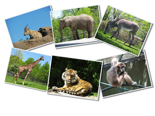 Bunch of animals photographs