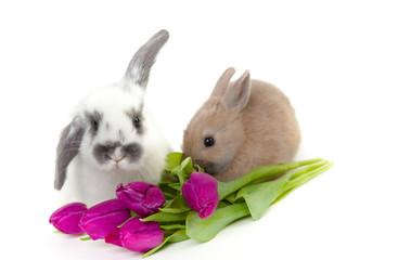 Frühling mit Hasen und Tulpen