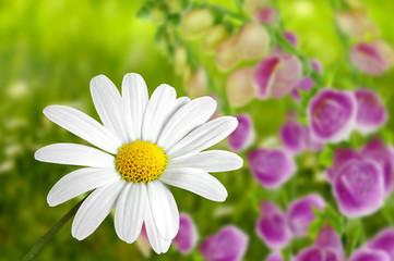 Blumen 182
