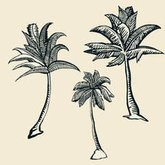 palm trees- objects