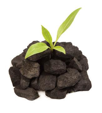 Plant growing in Coal