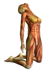 Wall Mural - Muskelaufbau Frau auf Knien Kopf nach hinten