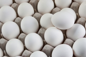 Large number of white eggs