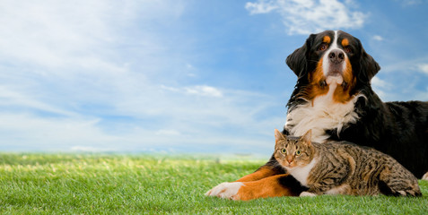 Dog and cat friends together on grass