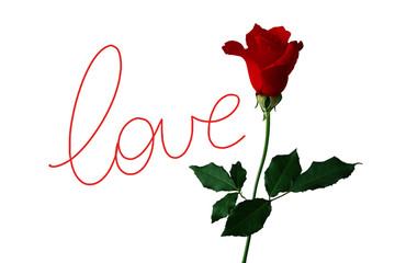 Love - Rose