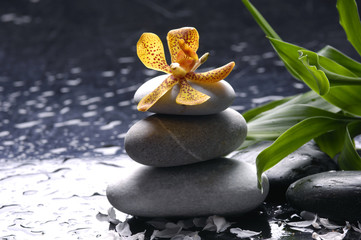 Wet stones and orchid flower with green leaf