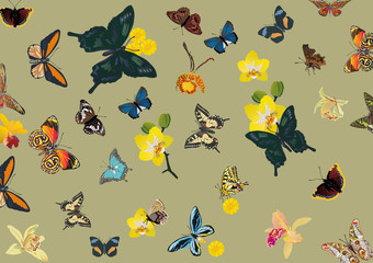 tropical butterfly and flower background