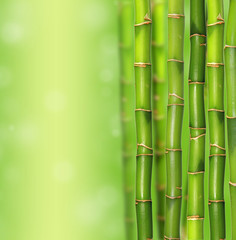 Bamboo jungle trees