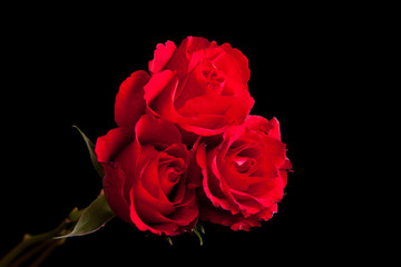 Red roses on black isolated background
