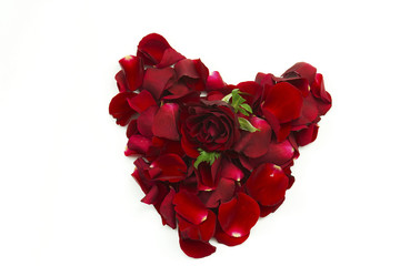 rose petal red heart and red rose