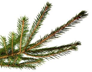 Fur tree