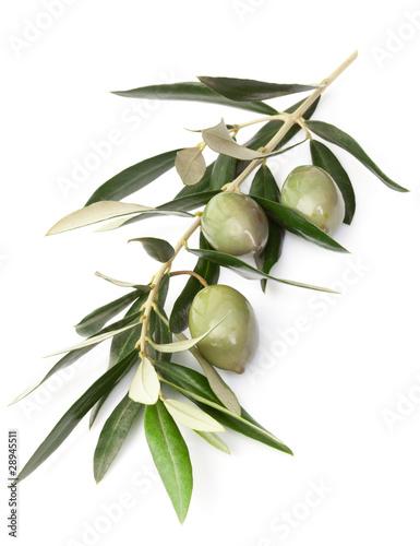 Ramoscello di ulivo immagini e fotografie royalty free for Acquisto piante olivo
